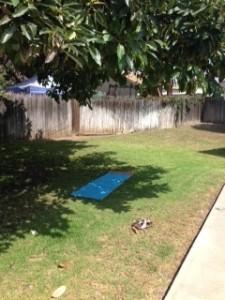 Avocado Tree with Yoga Mat